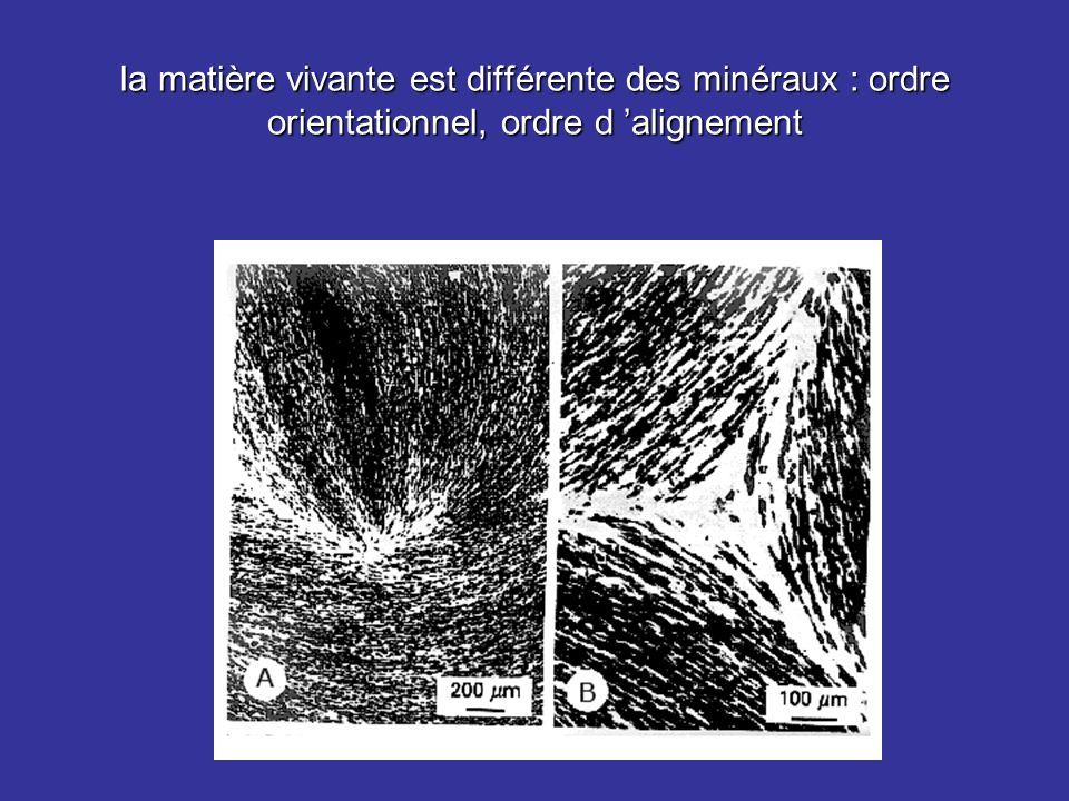 la matière vivante est différente des minéraux : ordre orientationnel, ordre d alignement