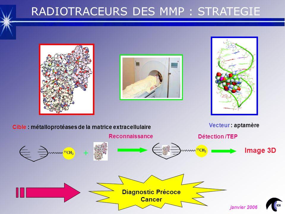 + Image 3D Diagnostic Précoce Cancer RADIOTRACEURS DES MMP : STRATEGIE Vecteur : aptamère Reconnaissance Détection /TEP Cible : métalloprotéases de la matrice extracellulaire janvier 2006