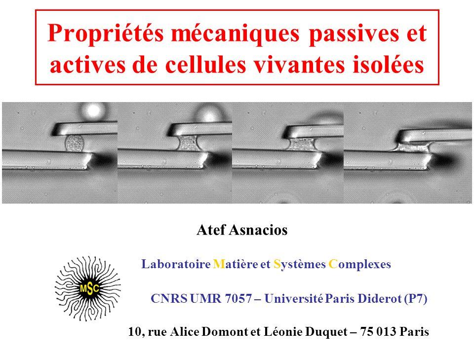 Laboratoire Matière et Systèmes Complexes CNRS UMR 7057 – Université Paris Diderot (P7) 10, rue Alice Domont et Léonie Duquet – 75 013 Paris Propriété