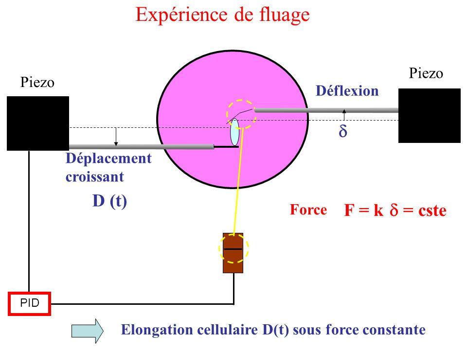 Piezo PID D (t) Force F = k = cste Elongation cellulaire D(t) sous force constante Déplacement croissant Déflexion Expérience de fluage