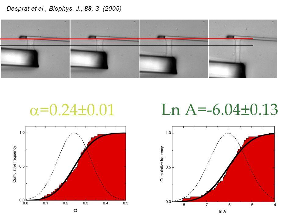 Ln A=-6.04±0.13 =0.24±0.01 Desprat et al., Biophys. J., 88, 3 (2005)