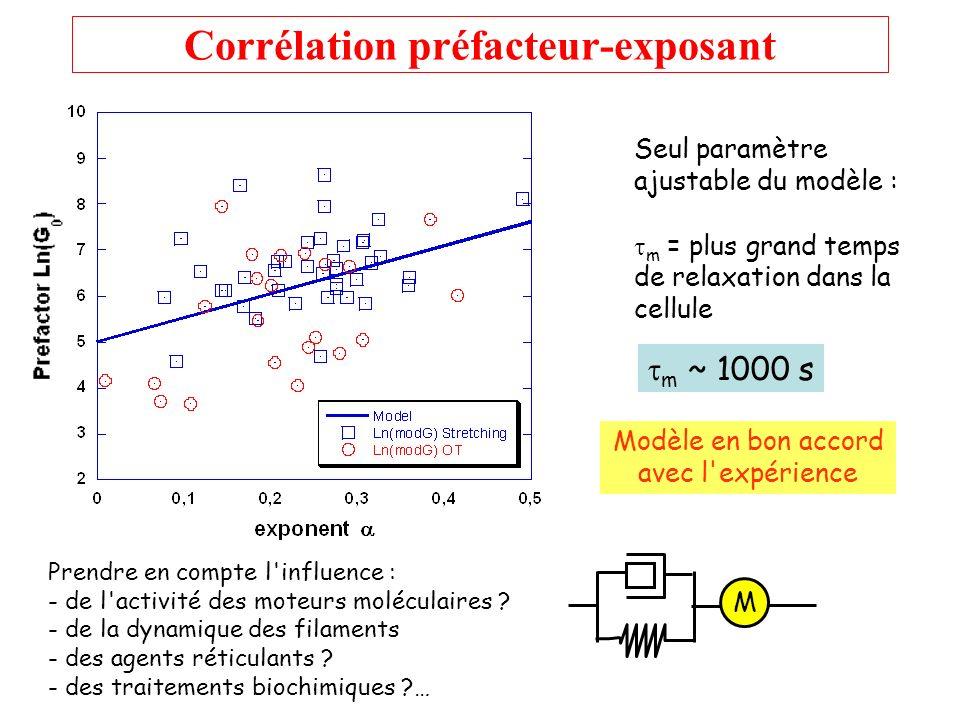 Corrélation préfacteur-exposant Seul paramètre ajustable du modèle : m = plus grand temps de relaxation dans la cellule m ~ 1000 s Prendre en compte l