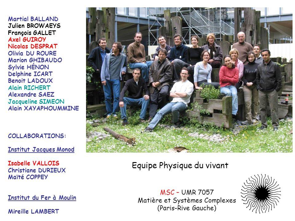 MSC – UMR 7057 Matière et Systèmes Complexes (Paris-Rive Gauche) Equipe Physique du vivant Martial BALLAND Julien BROWAEYS François GALLET Axel GUIROY