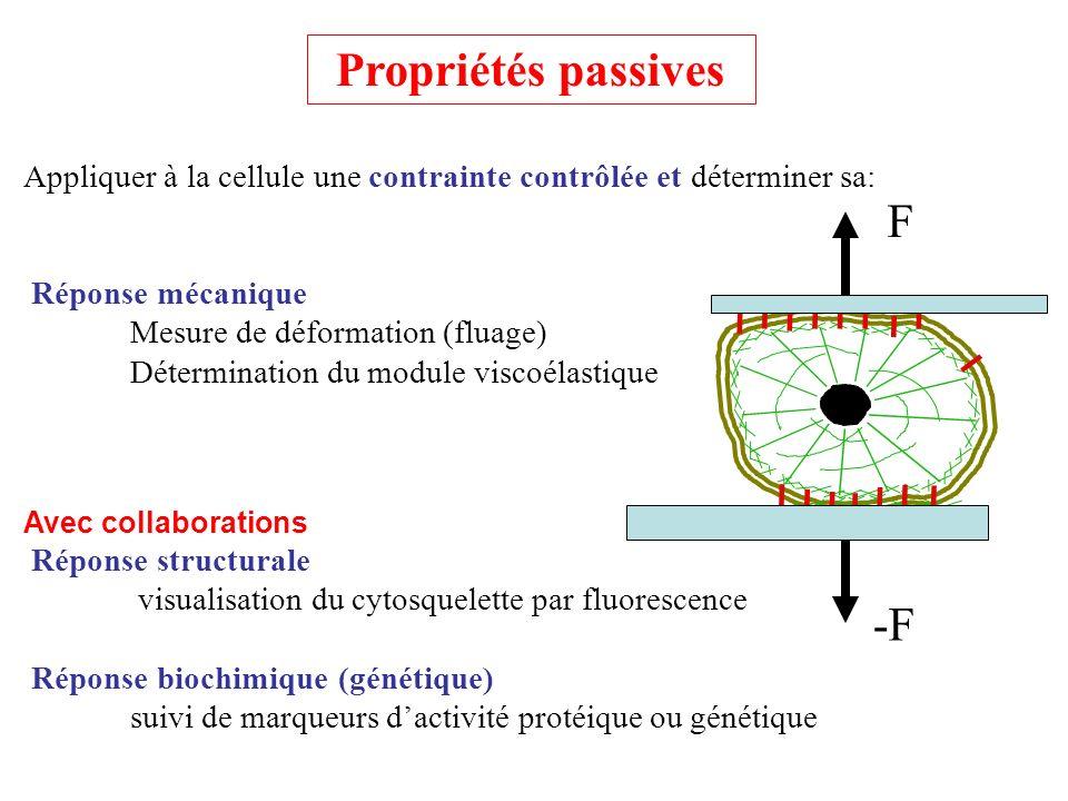 Observer lévolution dune cellule dans une géométrie (3D) prédéfinie et simple : Activité mécanique Mesure de la force appliquée par une cellule Corrélation avec lévolution de sa forme Avec collaborations Réponse structurale visualisation du cytosquelette par fluorescence F -F Propriétés actives