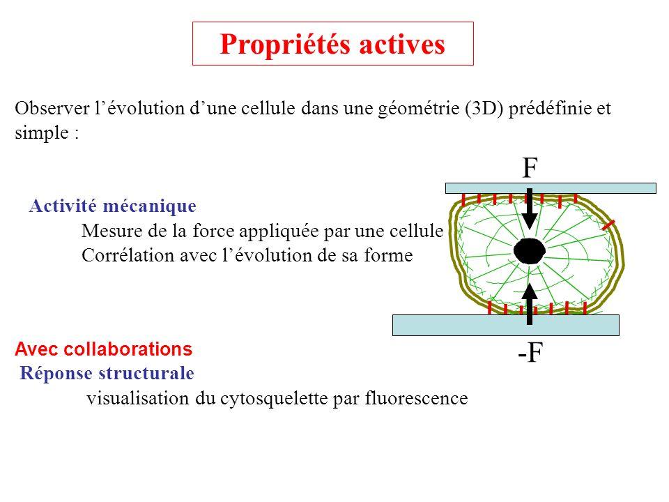 Observer lévolution dune cellule dans une géométrie (3D) prédéfinie et simple : Activité mécanique Mesure de la force appliquée par une cellule Corrél