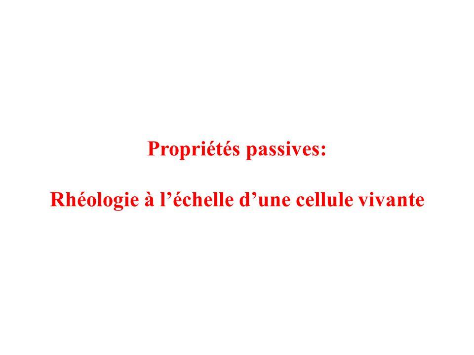 Propriétés passives: Rhéologie à léchelle dune cellule vivante