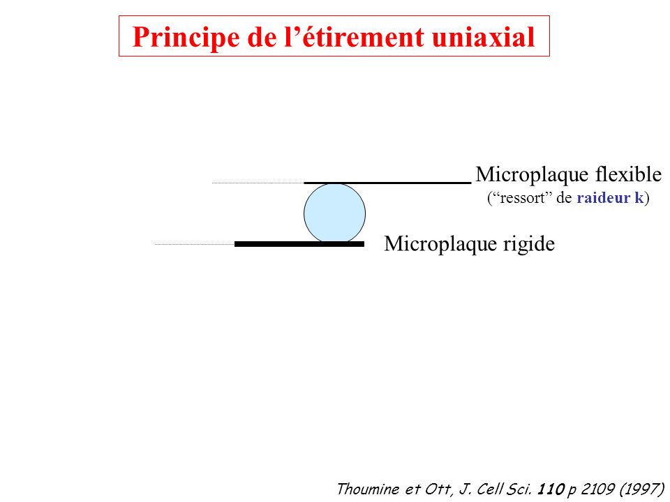 D Déplacement Déflexion Thoumine et Ott, J.Cell Sci.