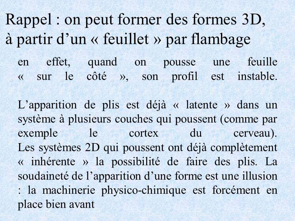 En fait, cest le développement de lécoulement tourbillon Cas du corps des embryons Écoulement hyperbolique : élongationnel