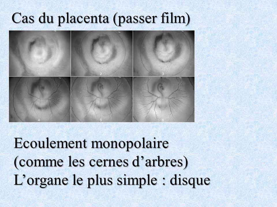 Cas du placenta (passer film) Ecoulement monopolaire (comme les cernes darbres) Lorgane le plus simple : disque