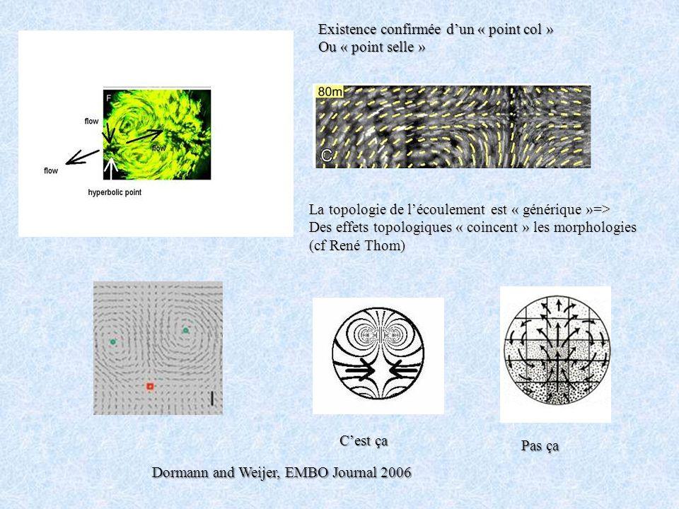 Dormann and Weijer, EMBO Journal 2006 Cest ça Pas ça Existence confirmée dun « point col » Ou « point selle » La topologie de lécoulement est « généri