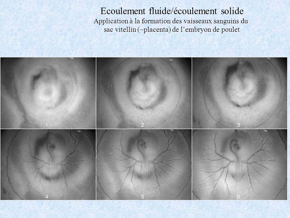 Ecoulement fluide/écoulement solide Application à la formation des vaisseaux sanguins du sac vitellin (~placenta) de lembryon de poulet
