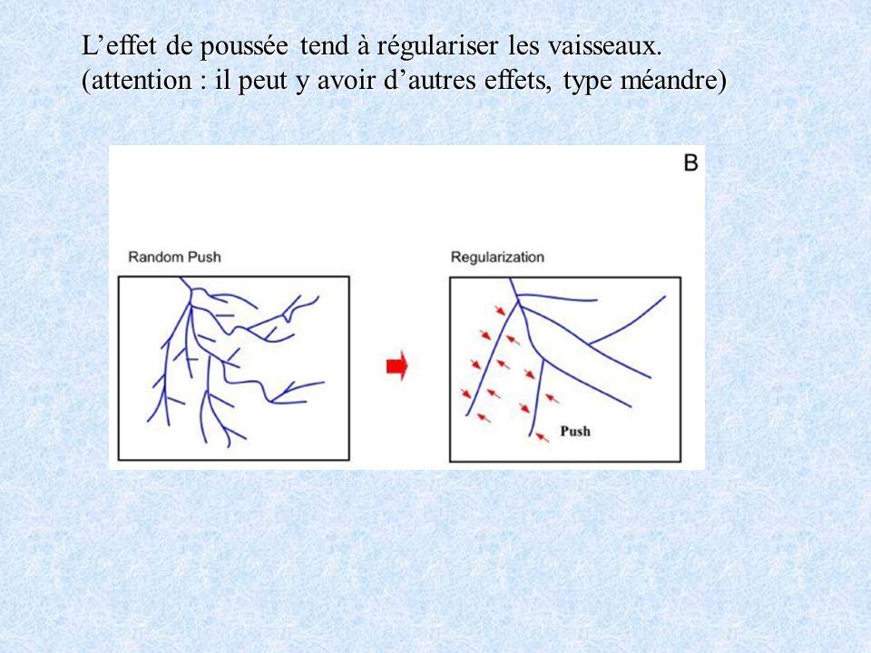 Leffet de poussée tend à régulariser les vaisseaux. (attention : il peut y avoir dautres effets, type méandre)