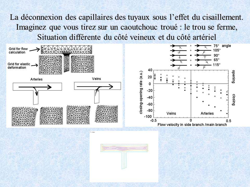 La déconnexion des capillaires des tuyaux sous leffet du cisaillement. Imaginez que vous tirez sur un caoutchouc troué : le trou se ferme, Situation d