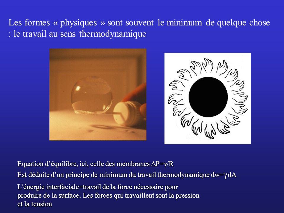 Equation déquilibre, ici, celle des membranes P= /R Est déduite dun principe de minimum du travail thermodynamique dw= dA Les formes « physiques » son