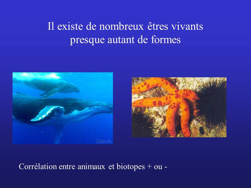 Il existe de nombreux êtres vivants presque autant de formes Corrélation entre animaux et biotopes + ou -