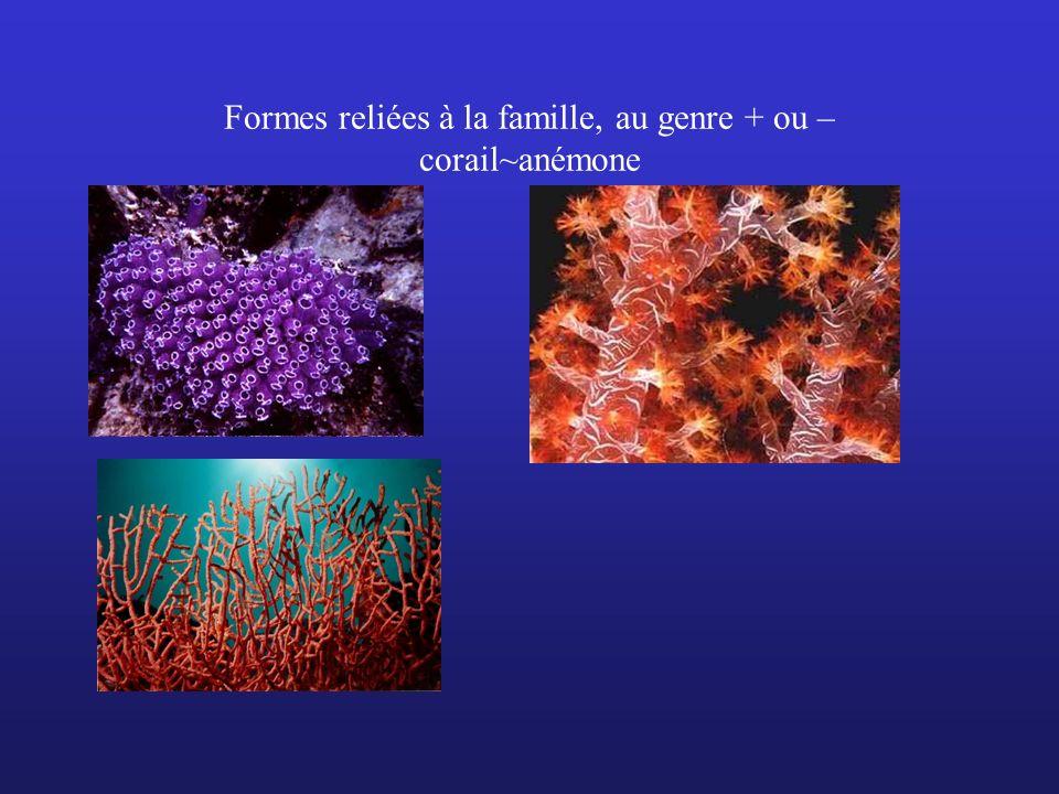 Formes reliées à la famille, au genre + ou – corail~anémone