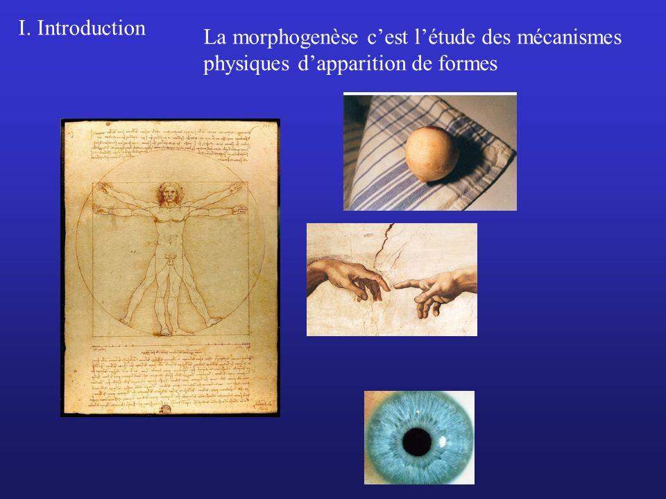 La morphogenèse cest létude des mécanismes physiques dapparition de formes I. Introduction