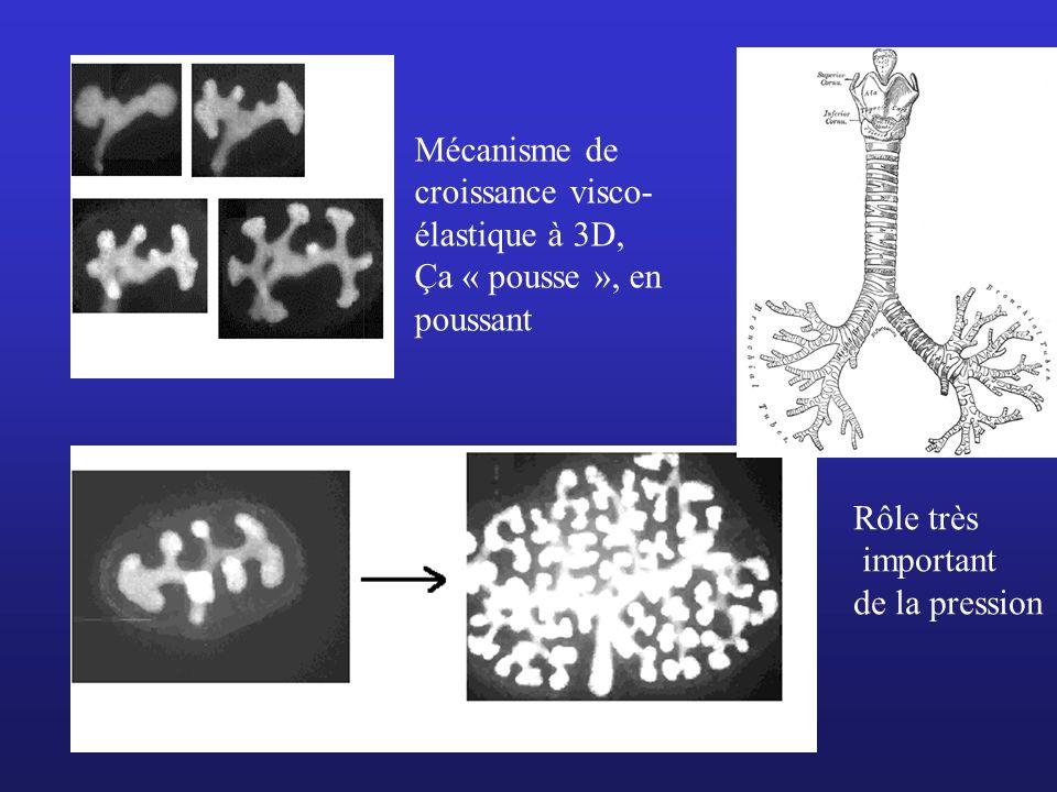 Mécanisme de croissance visco- élastique à 3D, Ça « pousse », en poussant Rôle très important de la pression