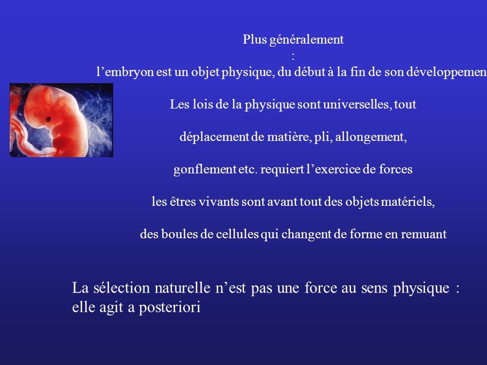 Plus généralement : lembryon est un objet physique, du début à la fin de son développement Les lois de la physique sont universelles, tout déplacement