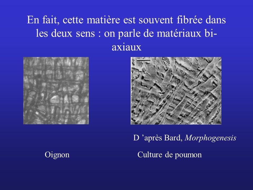 En fait, cette matière est souvent fibrée dans les deux sens : on parle de matériaux bi- axiaux D après Bard, Morphogenesis OignonCulture de poumon