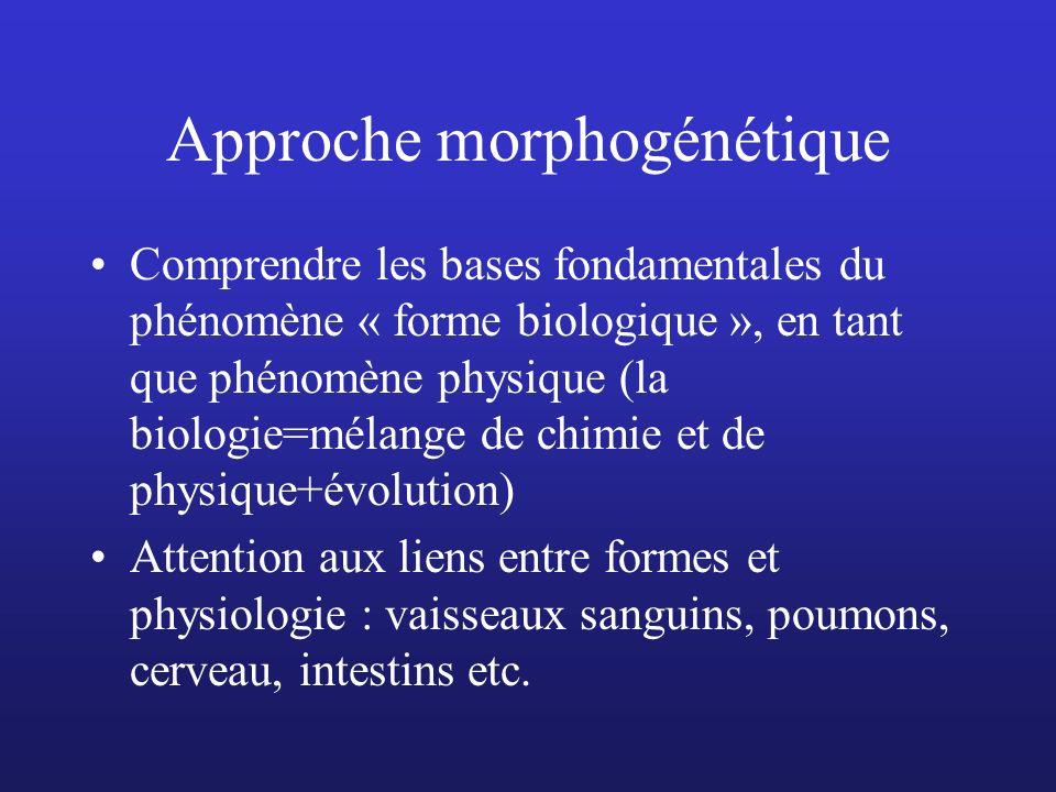 Approche morphogénétique Comprendre les bases fondamentales du phénomène « forme biologique », en tant que phénomène physique (la biologie=mélange de