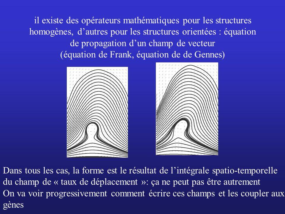 il existe des opérateurs mathématiques pour les structures homogènes, dautres pour les structures orientées : équation de propagation dun champ de vec