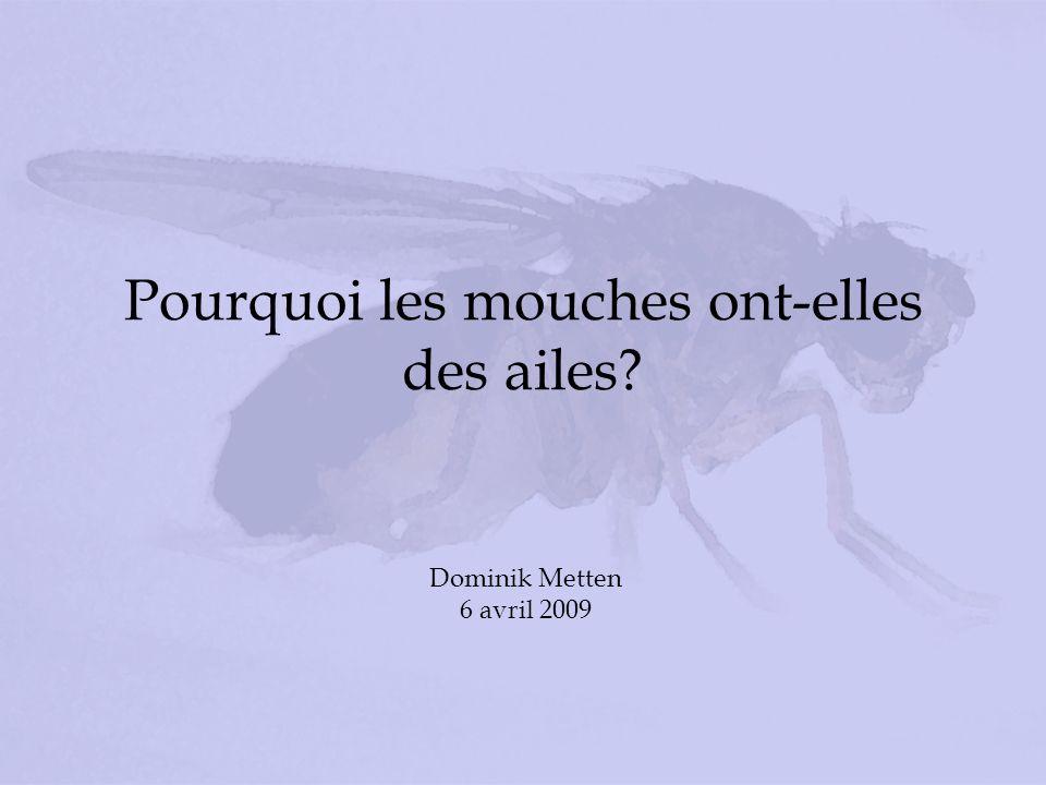 Pourquoi les mouches ont-elles des ailes? Dominik Metten 6 avril 2009