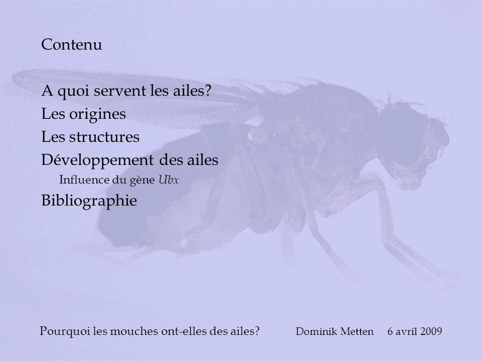 Pourquoi les mouches ont-elles des ailes? Dominik Metten 6 avril 2009 Contenu A quoi servent les ailes? Les origines Les structures Développement des
