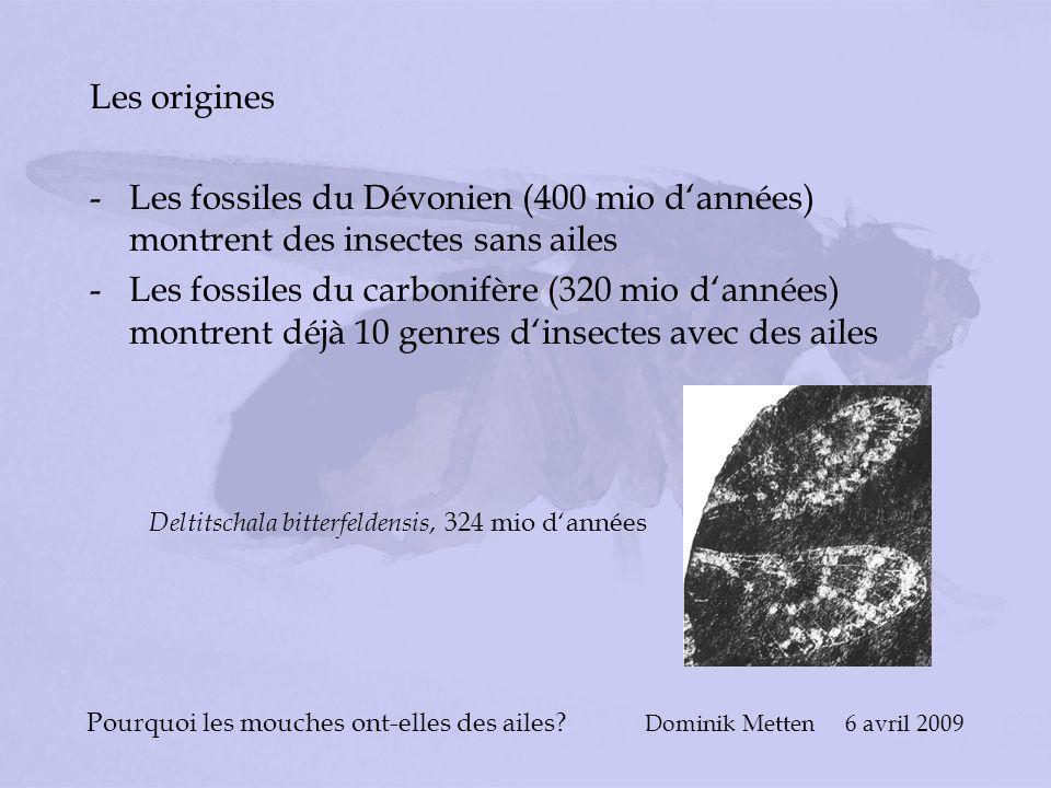 Pourquoi les mouches ont-elles des ailes? Dominik Metten 6 avril 2009 Les origines -Les fossiles du Dévonien (400 mio dannées) montrent des insectes s