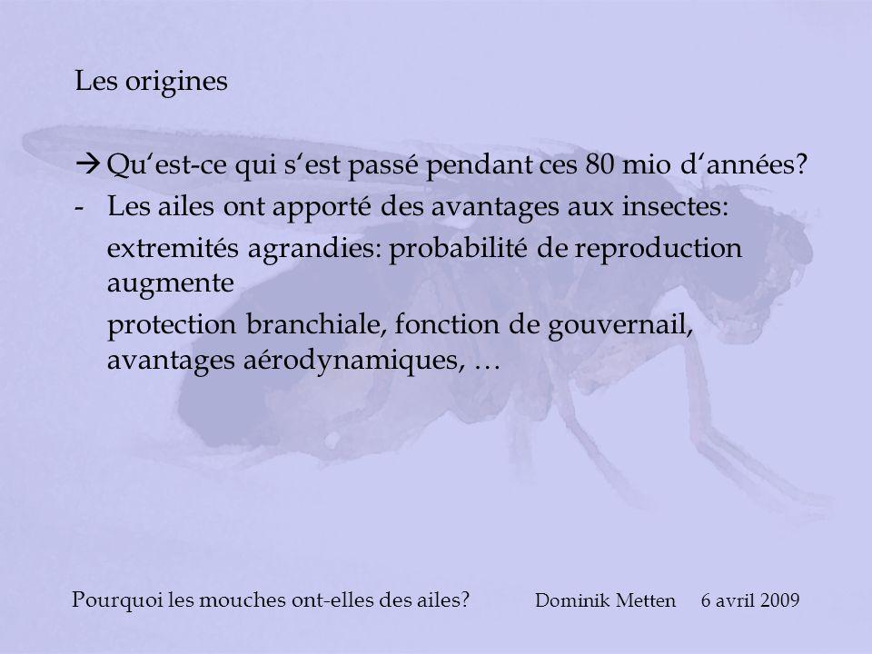 Pourquoi les mouches ont-elles des ailes? Dominik Metten 6 avril 2009 Les origines Quest-ce qui sest passé pendant ces 80 mio dannées? -Les ailes ont