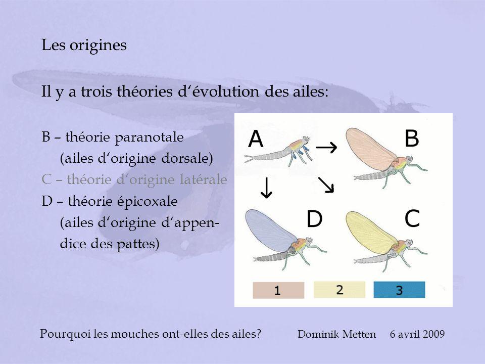 Pourquoi les mouches ont-elles des ailes? Dominik Metten 6 avril 2009 Les origines Il y a trois théories dévolution des ailes: B – théorie paranotale