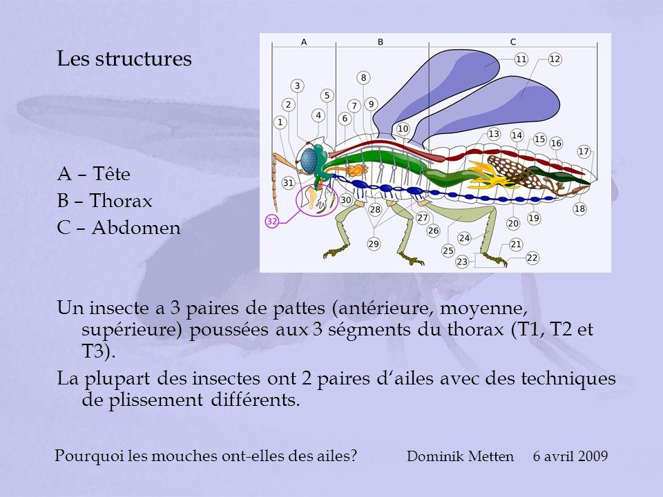 Pourquoi les mouches ont-elles des ailes? Dominik Metten 6 avril 2009 Les structures A – Tête B – Thorax C – Abdomen Un insecte a 3 paires de pattes (