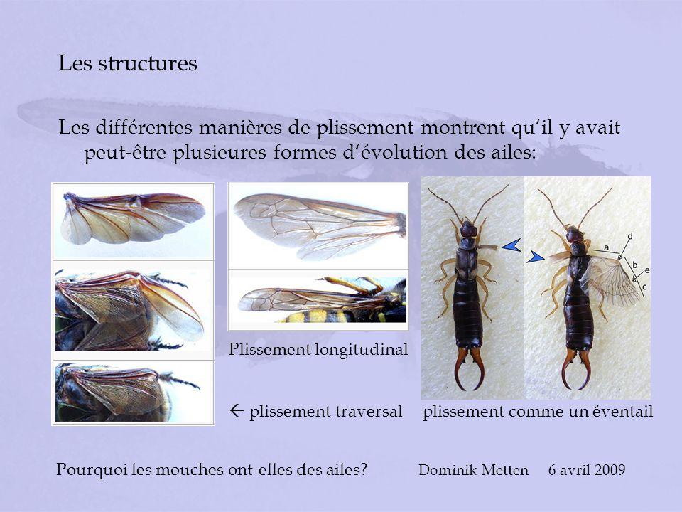 Pourquoi les mouches ont-elles des ailes? Dominik Metten 6 avril 2009 Les structures Les différentes manières de plissement montrent quil y avait peut