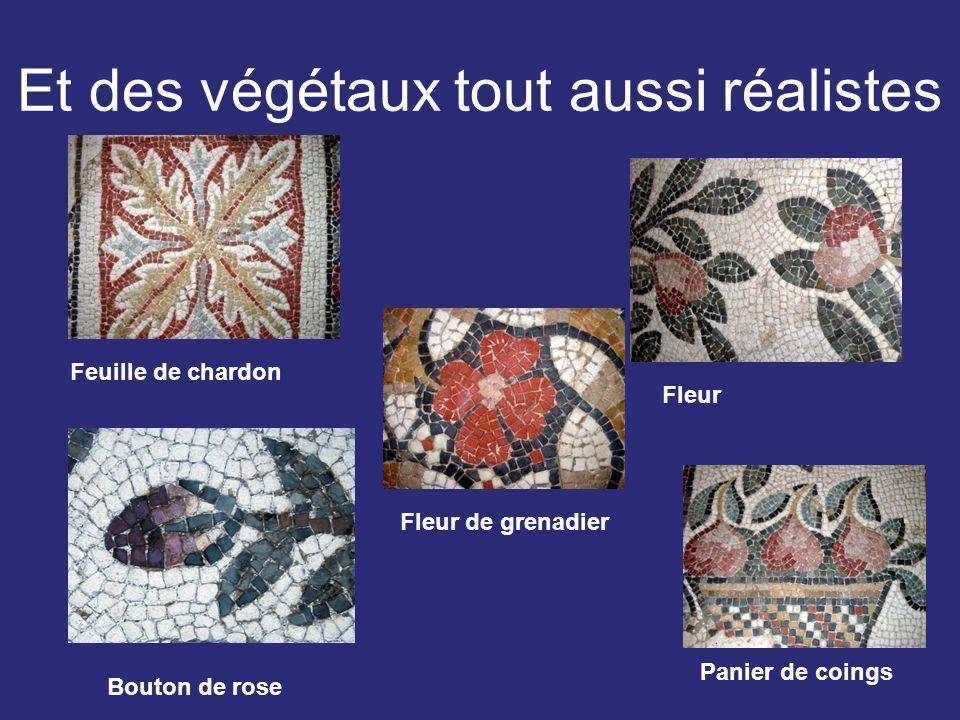 Et des végétaux tout aussi réalistes Feuille de chardon Fleur Bouton de rose Fleur de grenadier Panier de coings