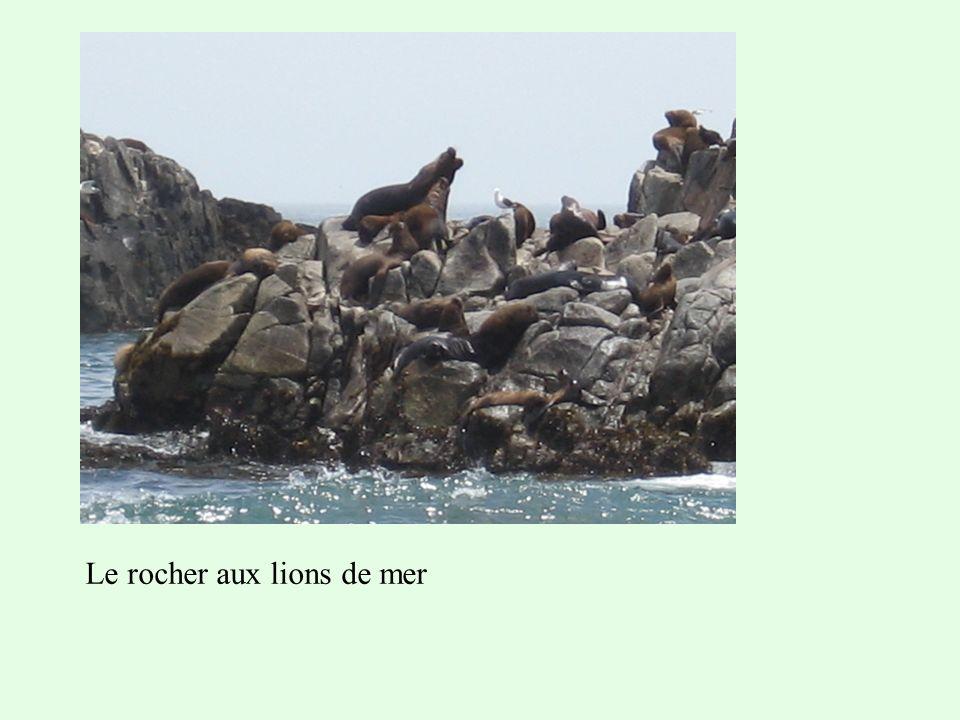 Le rocher aux lions de mer