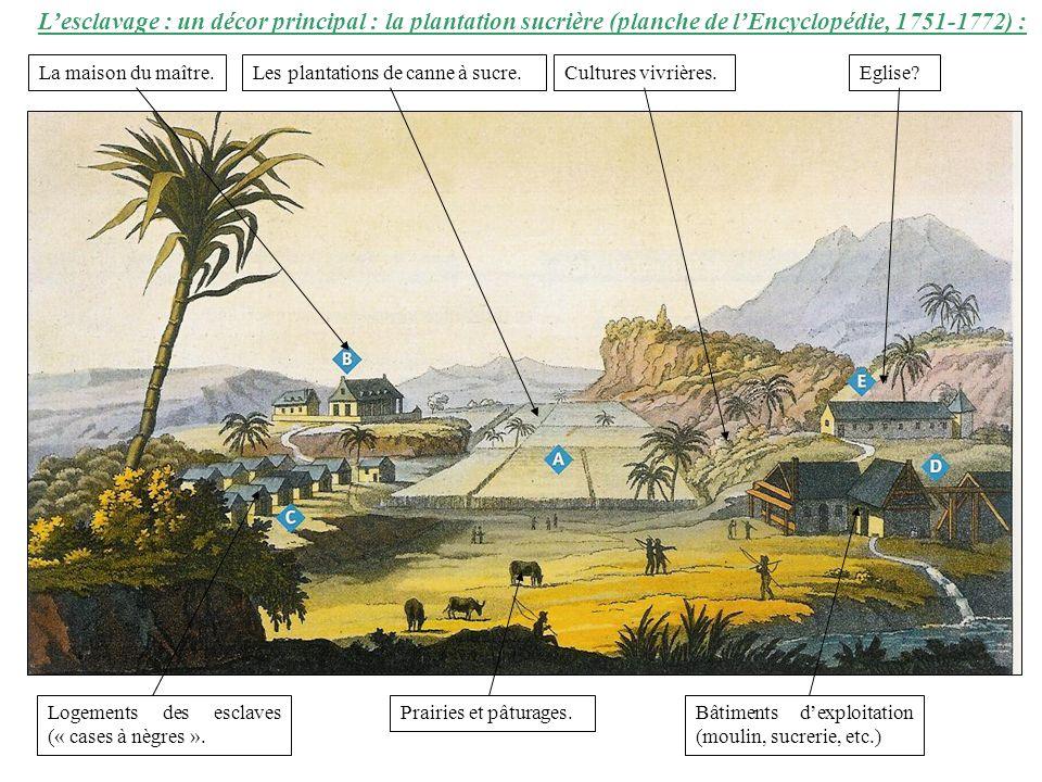 Lesclavage : un décor principal : la plantation sucrière (planche de lEncyclopédie, 1751-1772) : La maison du maître.Les plantations de canne à sucre.Cultures vivrières.Eglise.