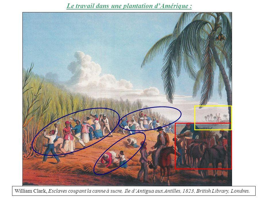 Le travail dans une plantation dAmérique : William Clark, Esclaves coupant la canne à sucre, Ile dAntigua aux Antilles, 1823, British Library, Londres.