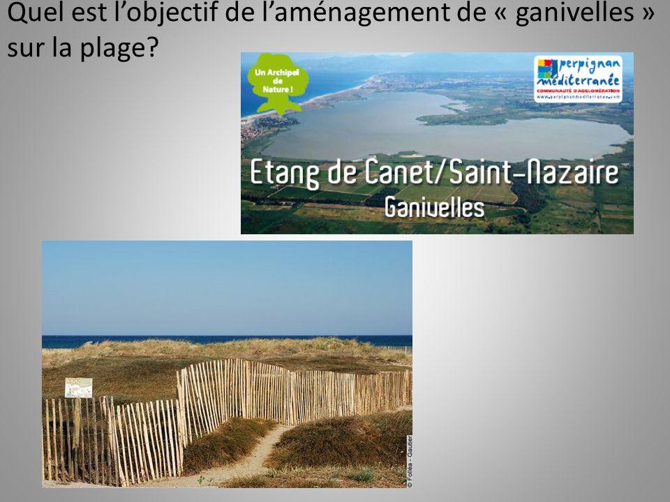 Quel est lobjectif de laménagement de « ganivelles » sur la plage?