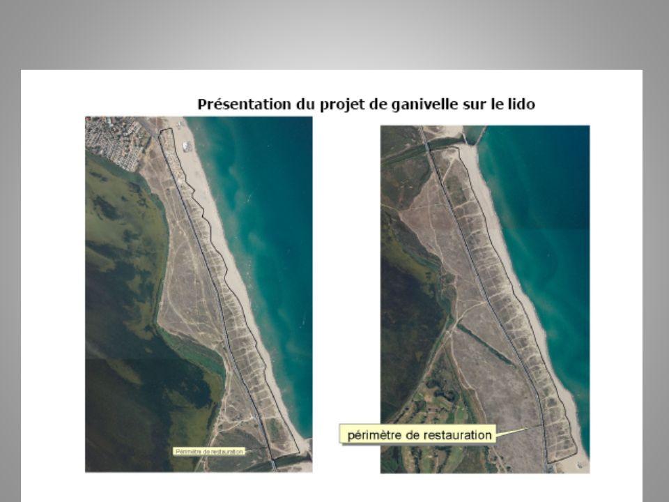 développement durable La station de Canet semble vouloir concilier deux phénomènes qui peuvent paraître contradictoires : rester une station de niveau international mais aussi limiter limpact de la fréquentation de ses plages pour préserver celles-ci.