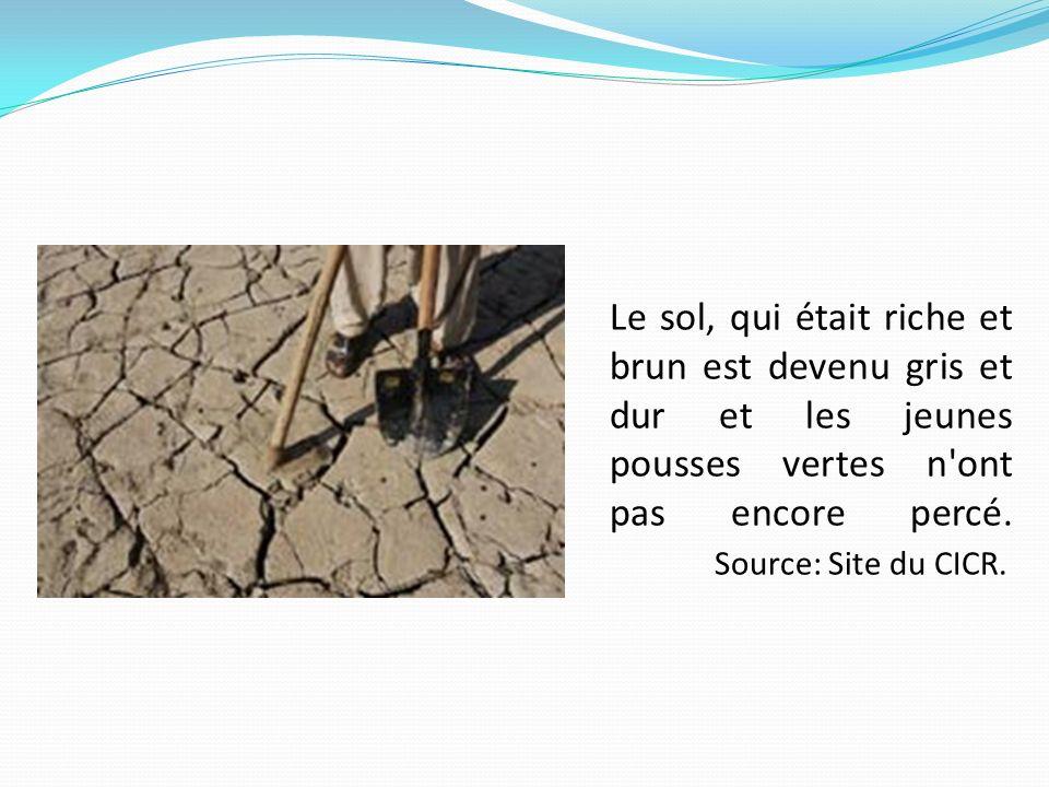 Le sol, qui était riche et brun est devenu gris et dur et les jeunes pousses vertes n'ont pas encore percé. Source: Site du CICR.