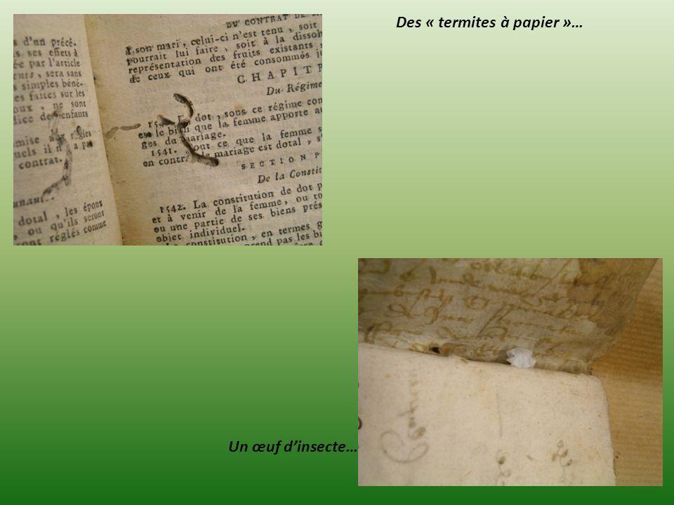 Des « termites à papier »… Un œuf dinsecte…