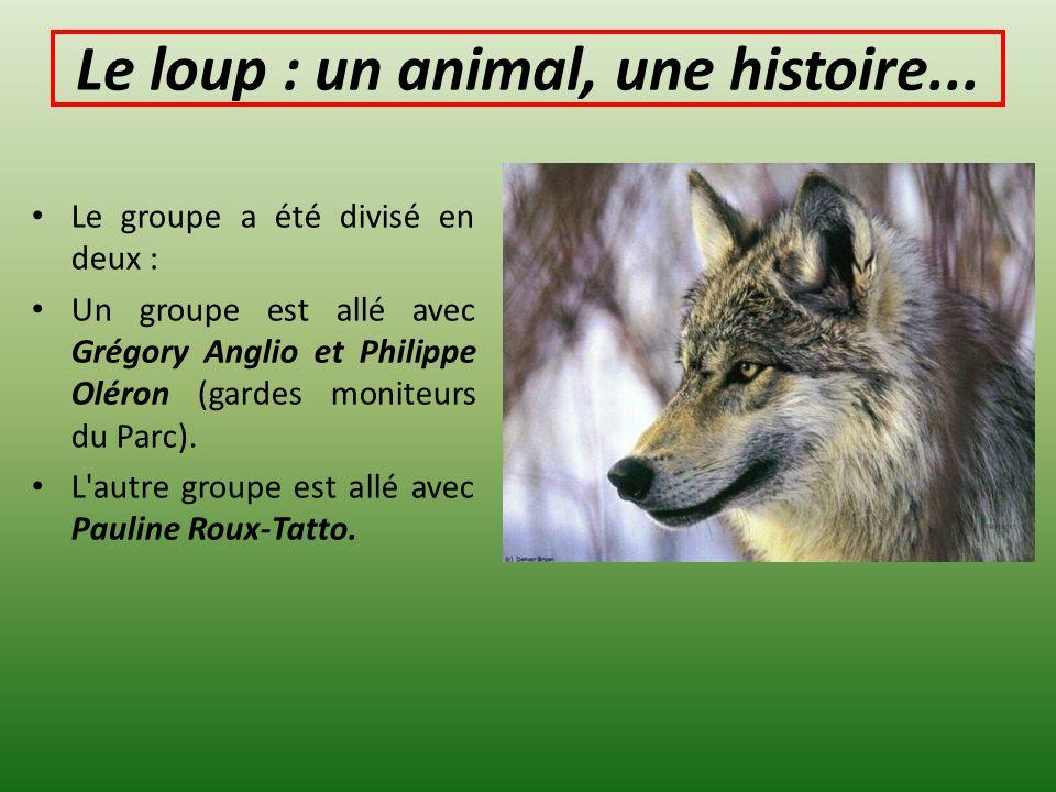 Le loup : un animal, une histoire... Le groupe a été divisé en deux : Un groupe est allé avec Grégory Anglio et Philippe Oléron (gardes moniteurs du P