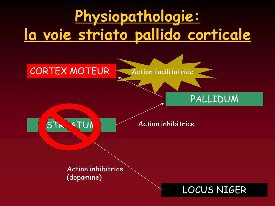 Physiopathologie: la voie striato pallido corticale CORTEX MOTEUR PALLIDUM Action facilitatrice STRIATUM Action inhibitrice LOCUS NIGER Action inhibit