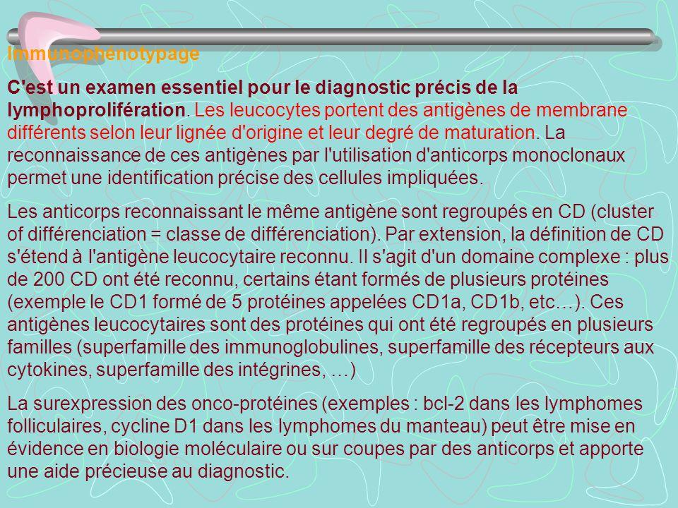 Immunophénotypage C'est un examen essentiel pour le diagnostic précis de la lymphoprolifération. Les leucocytes portent des antigènes de membrane diff