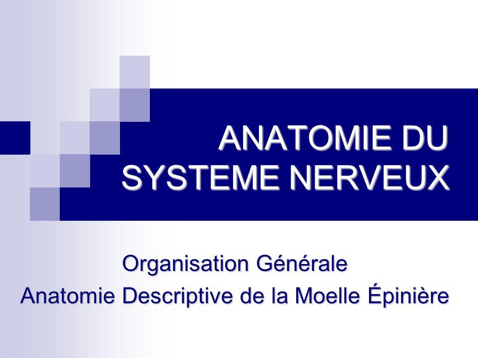 ANATOMIE DU SYSTEME NERVEUX Organisation Générale Anatomie Descriptive de la Moelle Épinière