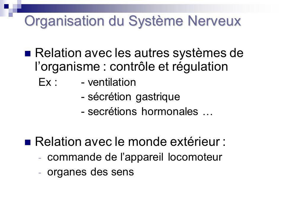 Organisation du Système Nerveux Relation avec les autres systèmes de lorganisme : contrôle et régulation Ex : - ventilation - sécrétion gastrique - se
