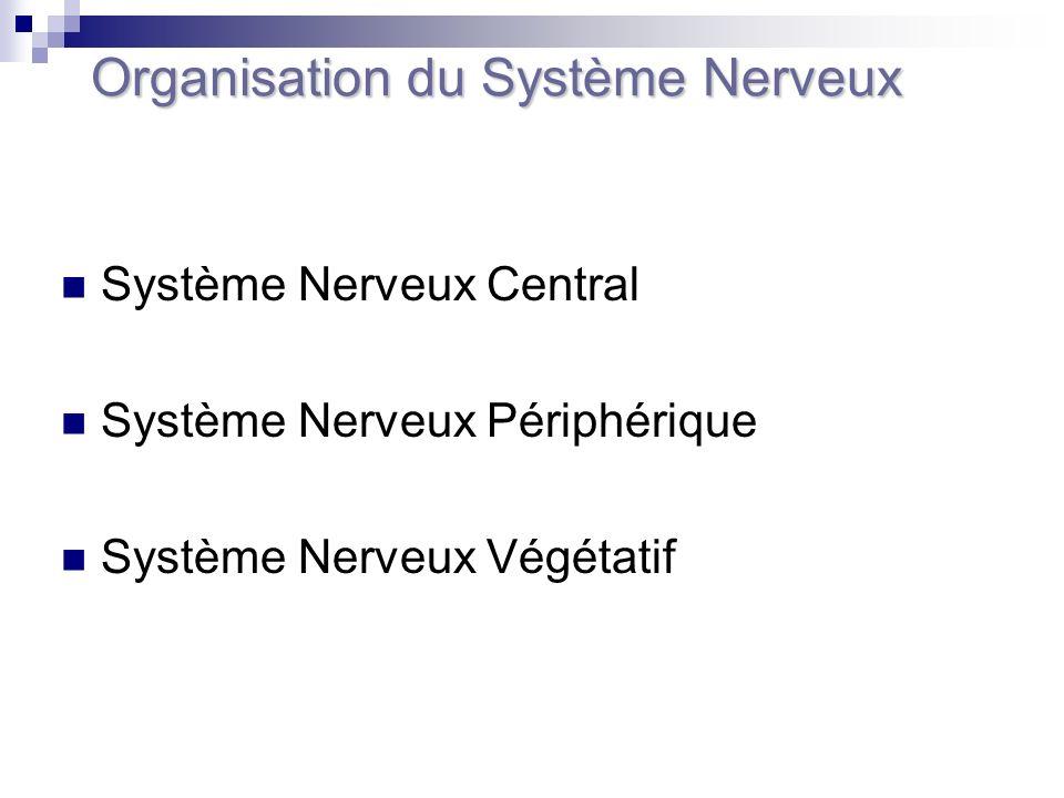 Système Nerveux Central Système Nerveux Périphérique Système Nerveux Végétatif Organisation du Système Nerveux