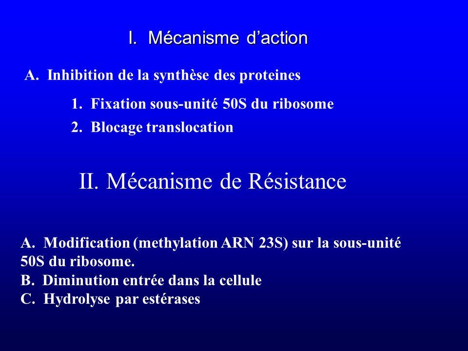 I. Mécanisme daction A. Inhibition de la synthèse des proteines 1. Fixation sous-unité 50S du ribosome 2. Blocage translocation II. Mécanisme de Résis