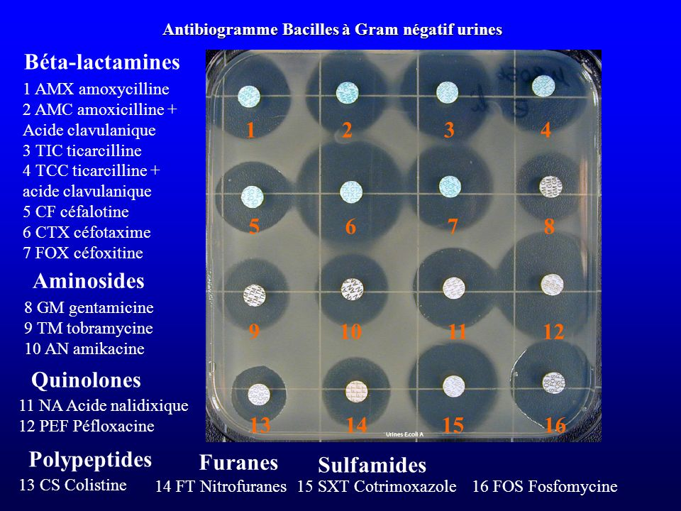 Béta-lactamines 1 AMX amoxycilline 2 AMC amoxicilline + Acide clavulanique 3 TIC ticarcilline 4 TCC ticarcilline + acide clavulanique 5 CF céfalotine