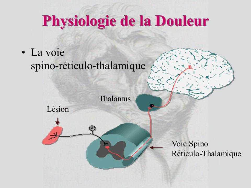 La voie spino-réticulo-thalamique Lésion Voie Spino Réticulo-Thalamique Thalamus